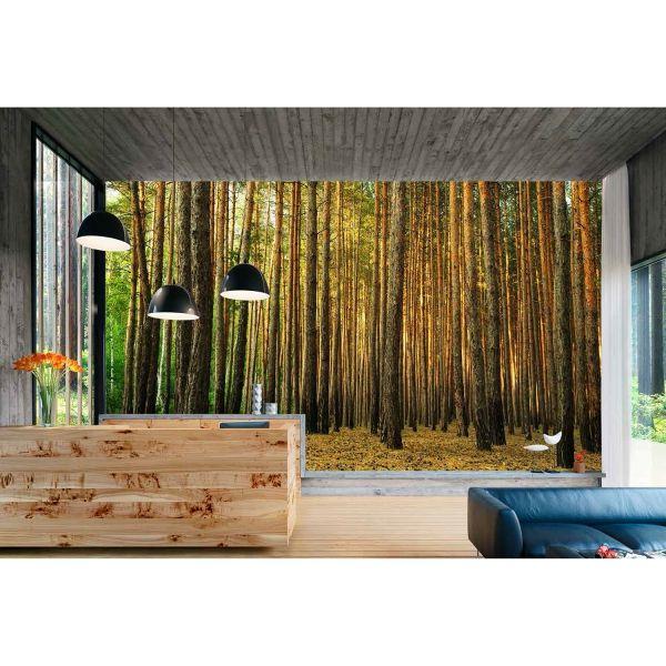 Orman İçi Ağaçlar Poster Duvar Kağıdı